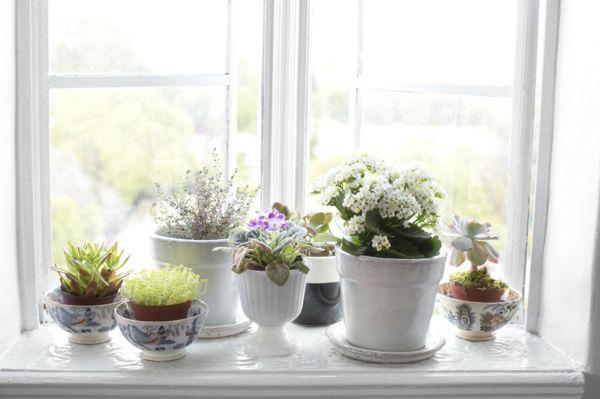 Pflanzen schätzen das feuchte Klima des Badezimmers