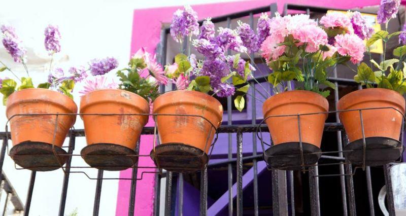 es ist h chste zeit dass sie sich um ihre balkonpflanzen k mmern. Black Bedroom Furniture Sets. Home Design Ideas