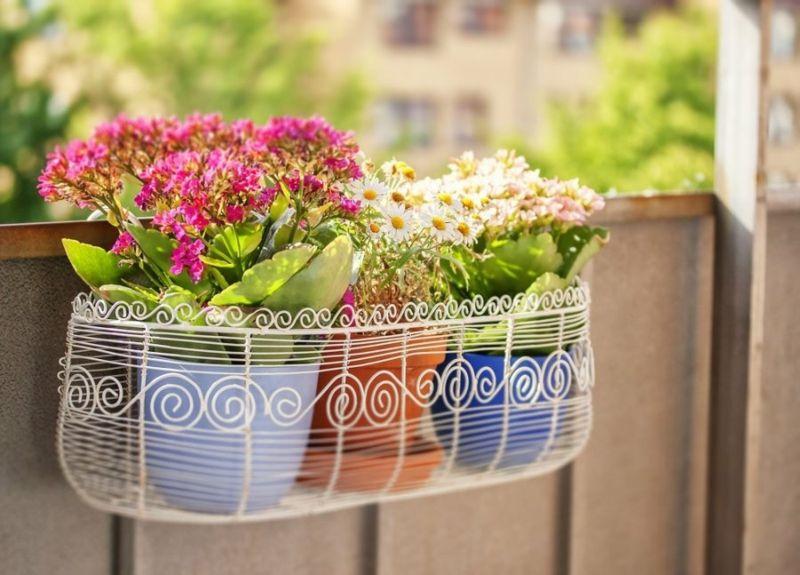 Pflanztöpfe Petunien sonnig Balkon mehrfarbig reichblühend