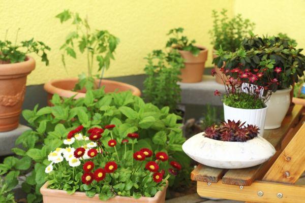 kleine Gärten, die mobil sind und die man je nach Lust und Laune neu arrangieren kann-deko ideen für balkon terrasse