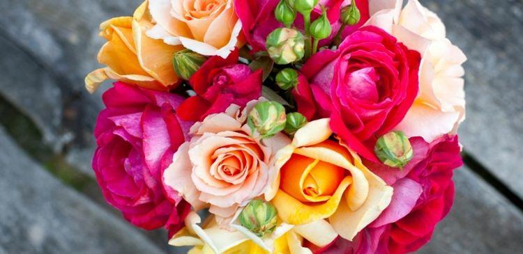Die herrlichen Rosen sind weltweit beliebt