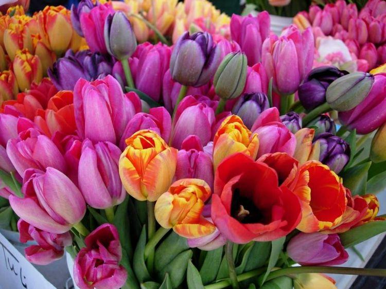 Die heiteren Farben der Tulpen kommen im Garten bestimmt gut zur Geltung