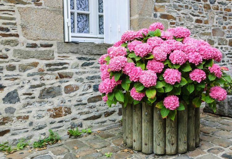 Brillante Gartenecke mit Hortensien in Rosa