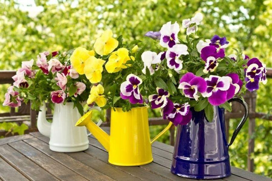 Die farbenfrohen Gießkannen sind ein trendiges Accessoire im Garten