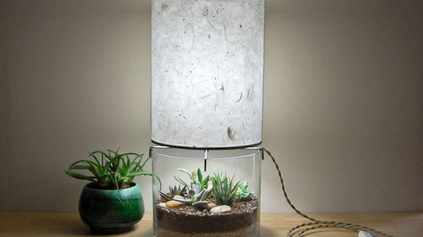 neuer hingucker zu hause mini terrarium mit gr nen pflanzen als teil einer eleganten. Black Bedroom Furniture Sets. Home Design Ideas