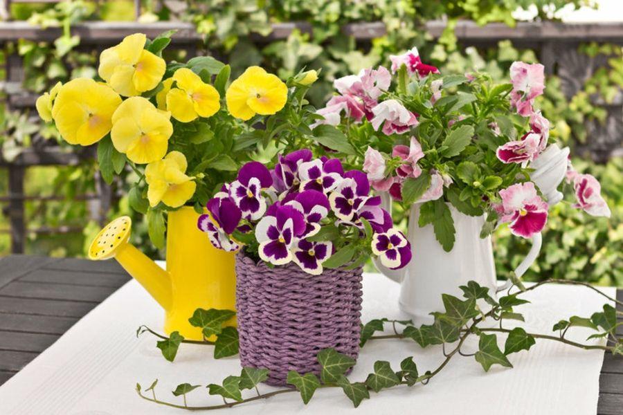 Die Töpfe harmonieren mit den heiteren Blüten