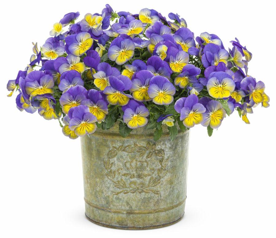 Ergänzen Sie die Vintage Atmosphäre mit einem Blumenstrauß in Metallvase