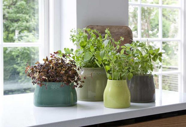 Wohnung Ideen Pflanzen frische Gewürze glasierte Töpfe üppig