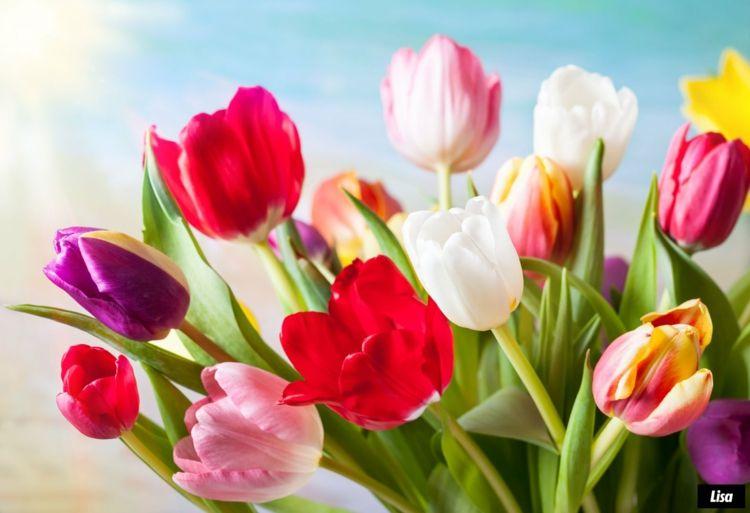 Farbenfrohe Tulpen bringen immer Freude mit
