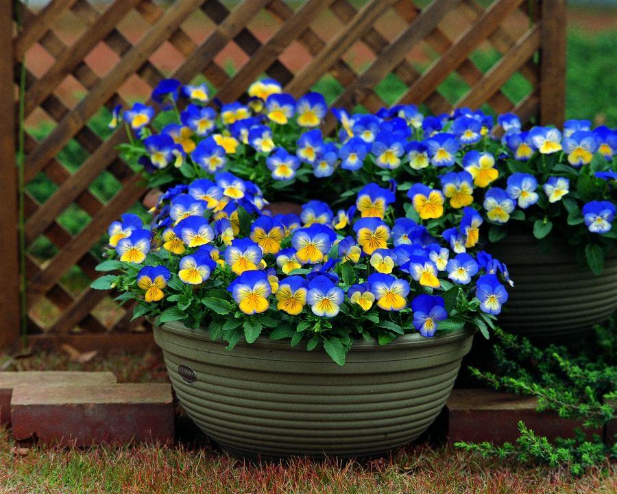 Die grellen Farben bringen Freude in jeden Garten