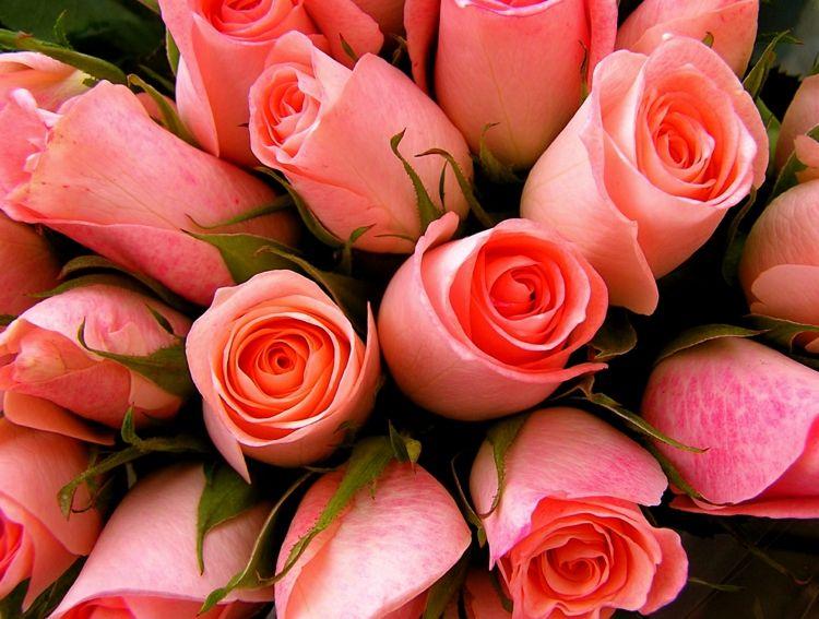 Die Schönheit der Rosen ist unvergänglich