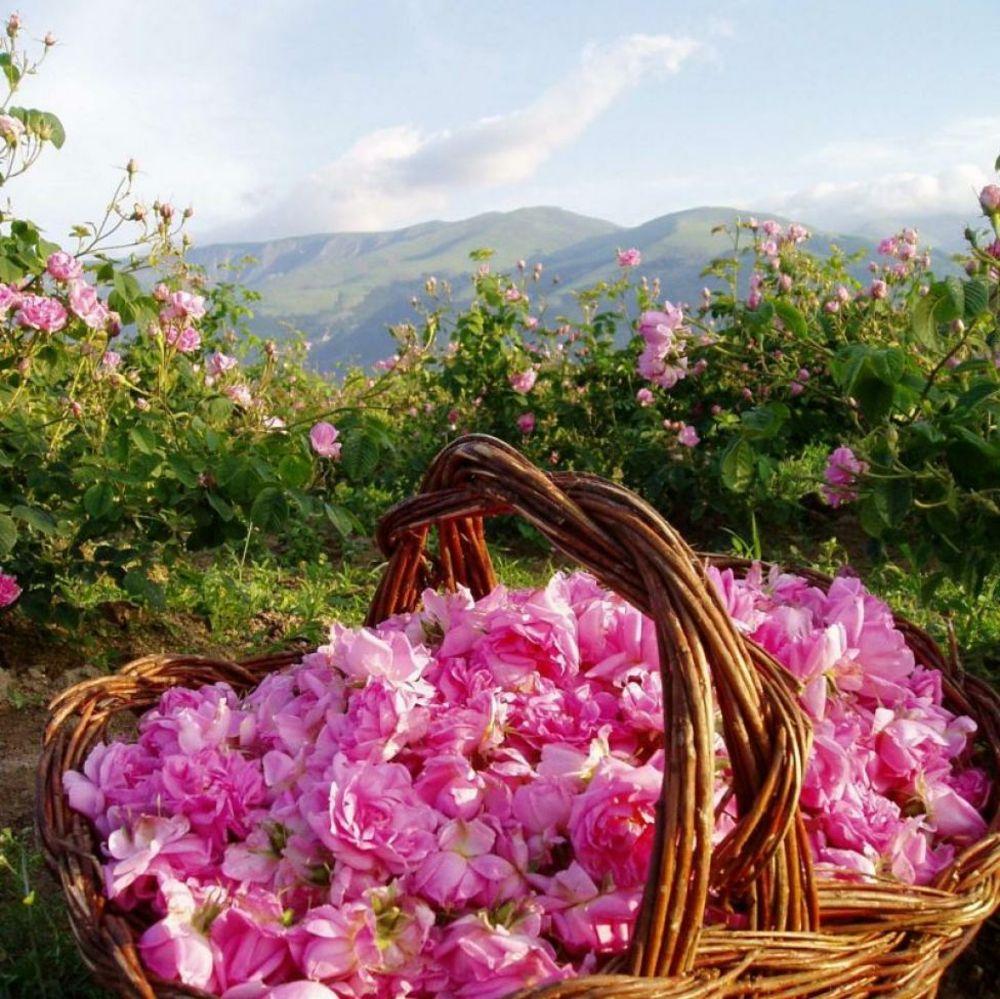 Der Rosental in Bulgarien