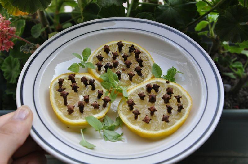 Die Zitrone ist keine Lieblingssache der Insekten