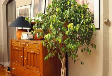 10 n tzliche pflanzen sorgen f r frische luft in ihrem zuhause - Pflanzen dekoration wohnzimmer ...
