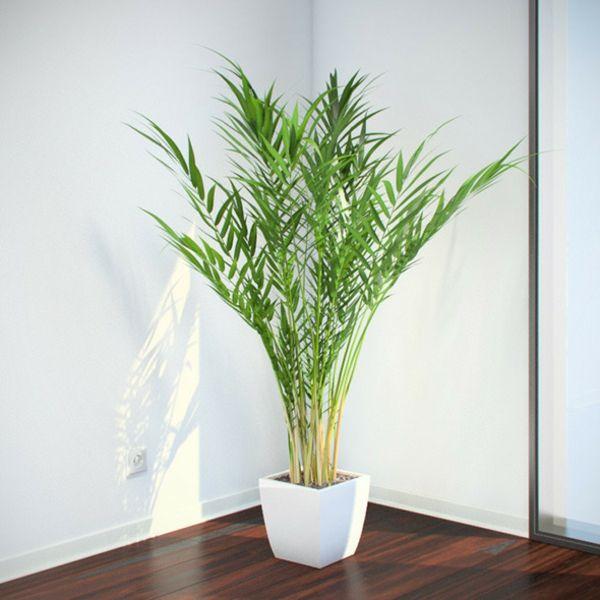 Bringen Sie mit einer Palme die Exotik nach Hause