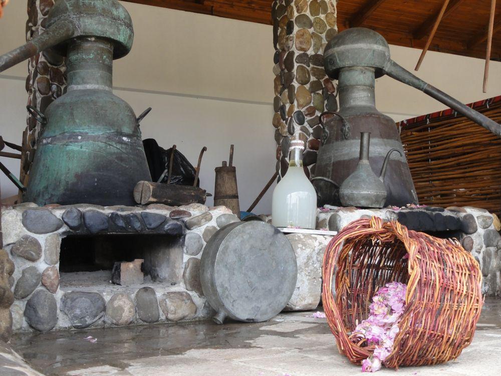 Rosa Damascena wird durch Wasserdampf-Destillation zu dem wertvollsten Rosenöl verarbeitet