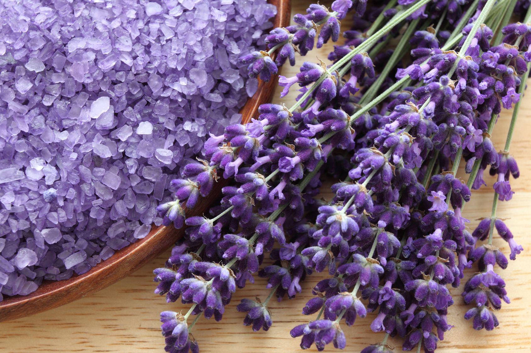 7 n tzliche eigenschaften von lavendel der blaue. Black Bedroom Furniture Sets. Home Design Ideas