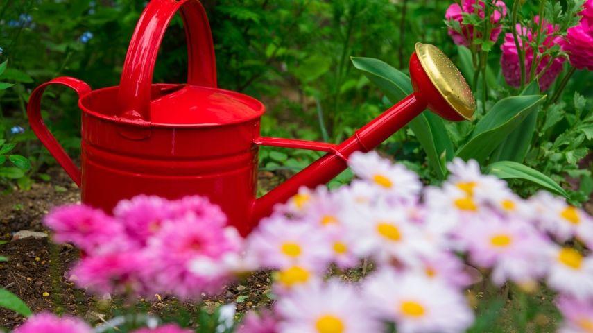 Den Garten Im Sommer Gießen