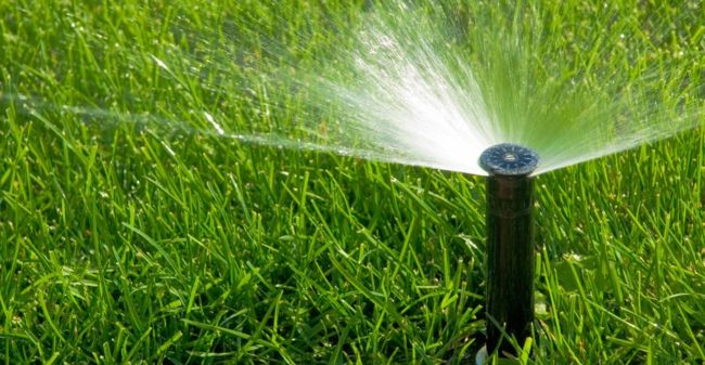 Den Rasen lieber etwas seltener dafür aber ausdauernder beregnen