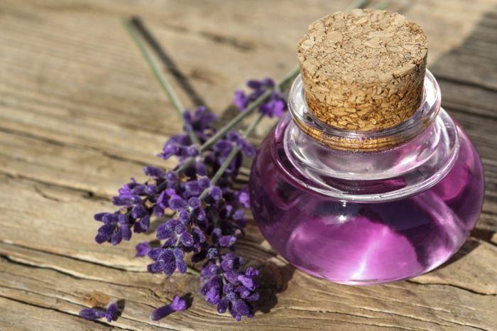 Nutzen Sie den Lavendel gegen Schlafstörungen