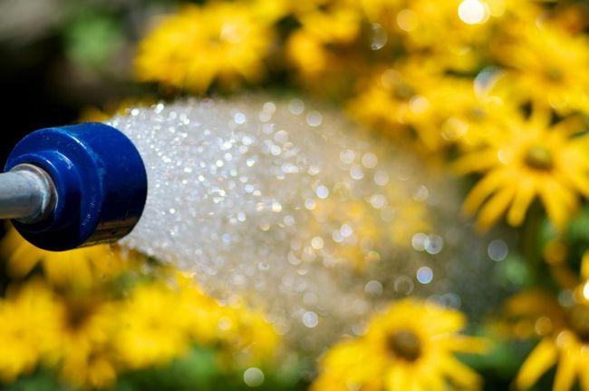 Es ist wichtig entweder früh am Morgen oder am späten Nachmittag die Pflanzen zu gießen