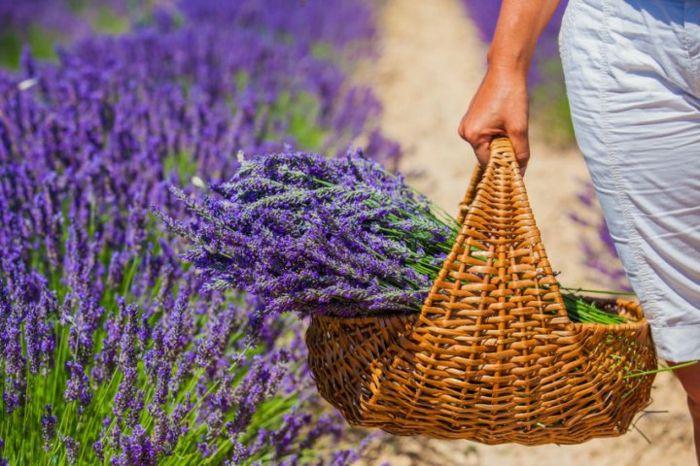 Lavendel Korb Lifestyle Deko Ideen
