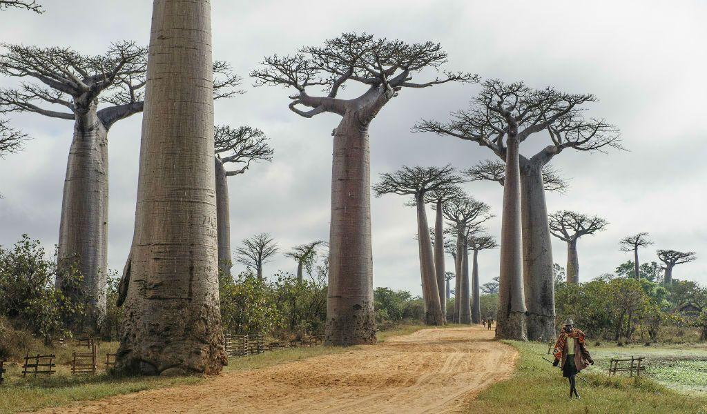 Sternzeichen Reiseziel Schütze Madagaskar Afrika