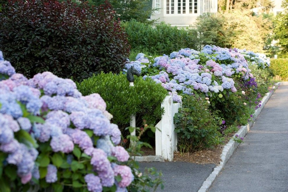 üppige Hortenzien in Blau Gartengestaltung