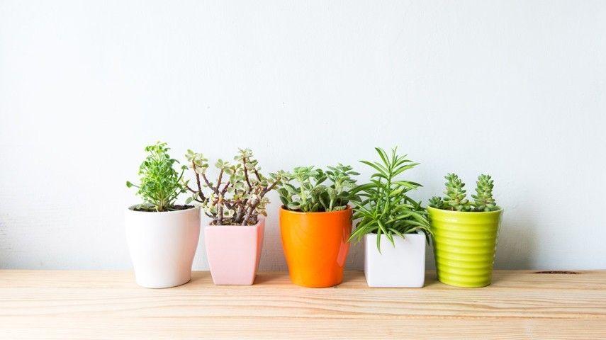 8 Tolle Zimmerpflanzen Die Für Angenehme Raumtemperatur Im Sommer
