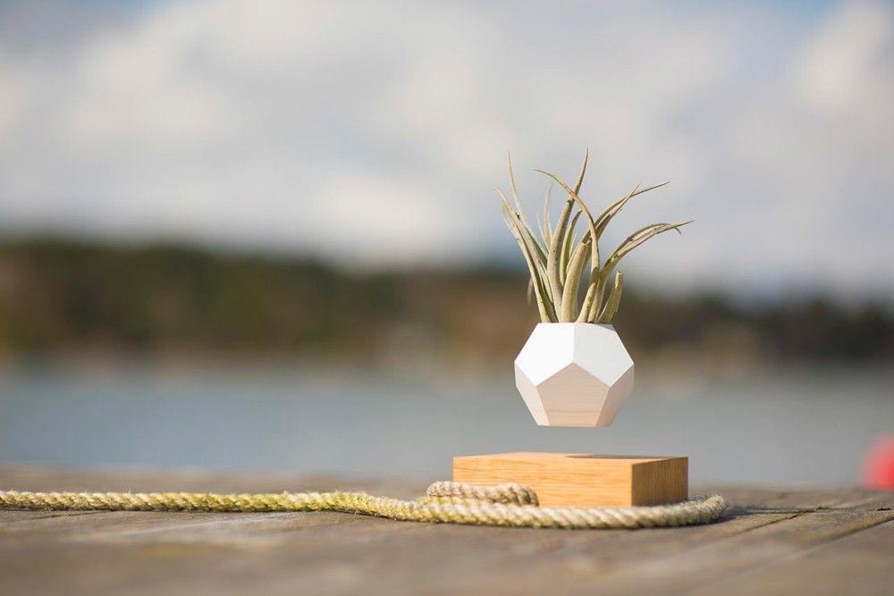 Außenbereich Deko Idee Sukkulent schwebender Blumentopf LYFE