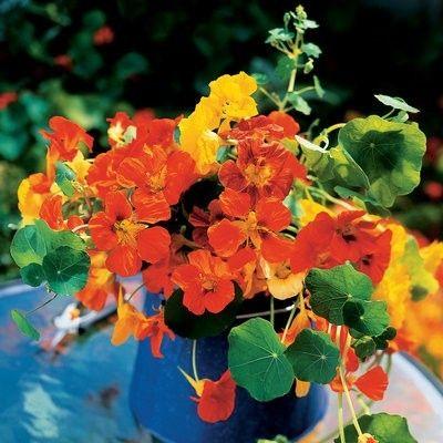 Blumenbehälter idee