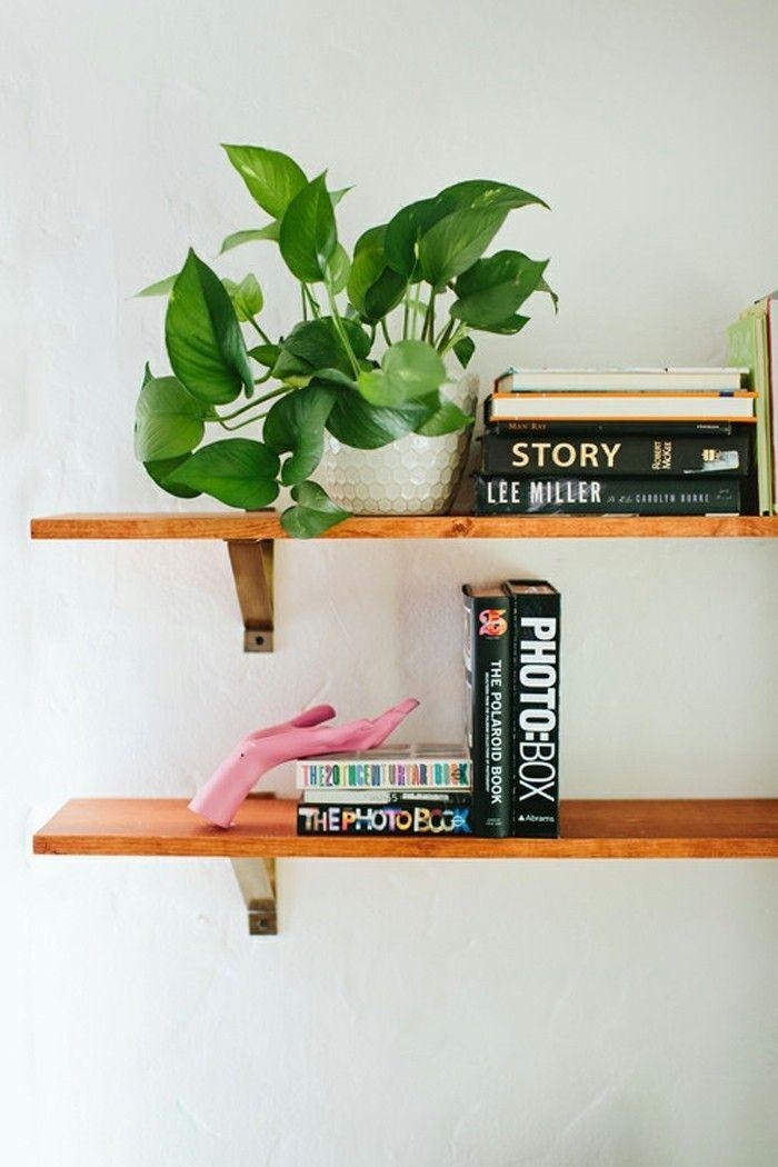 Efeutute im Sommer Zimmerpflanzen Bücherregal Deko