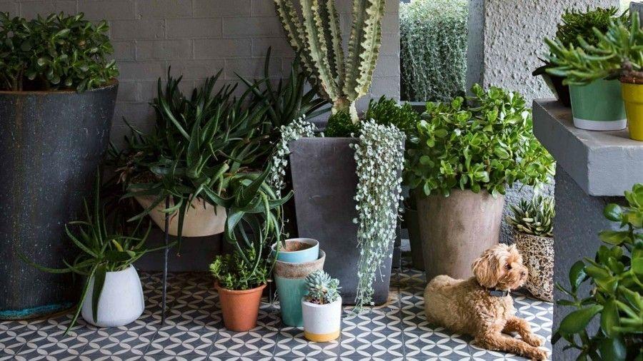 Ideen für außendekorationen outdoor pflanzkübel modern