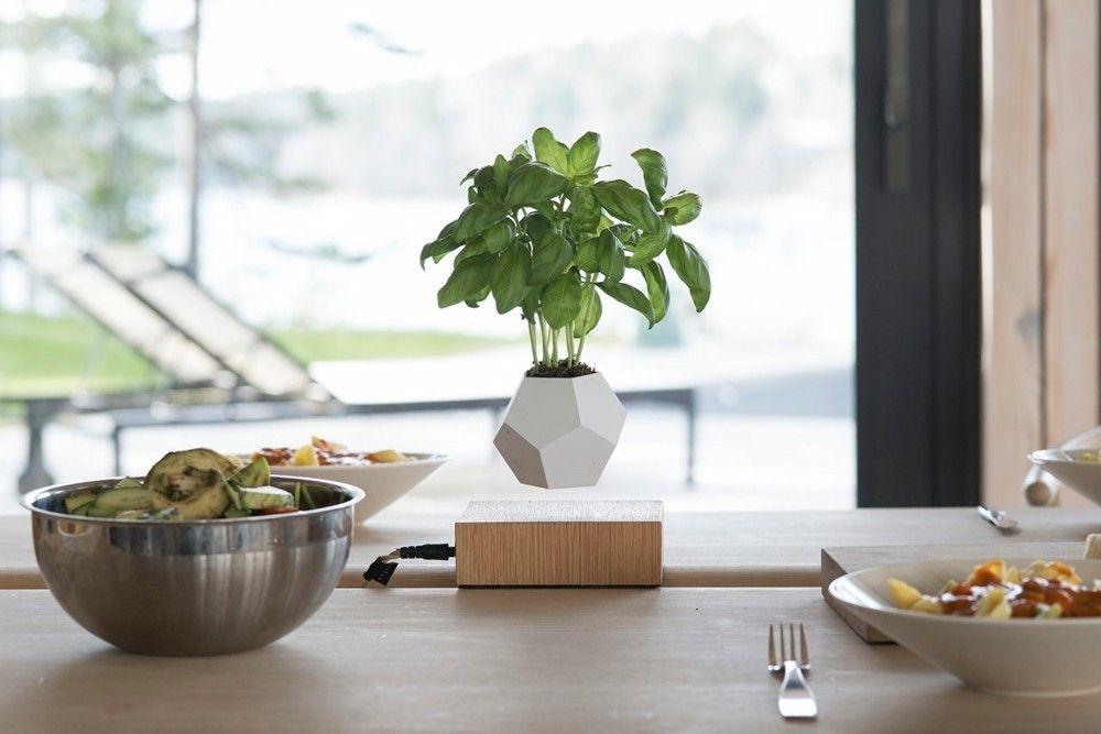 Küche Dekoration schwebender Blumentopf Basilikum