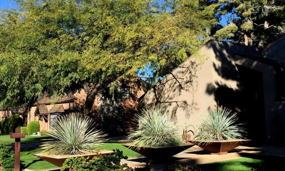 Kakteen im sonnigen Garten ausgefallene Übertöpfe