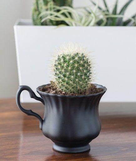 Keramiktöpfe schöne exotische Pflanzen