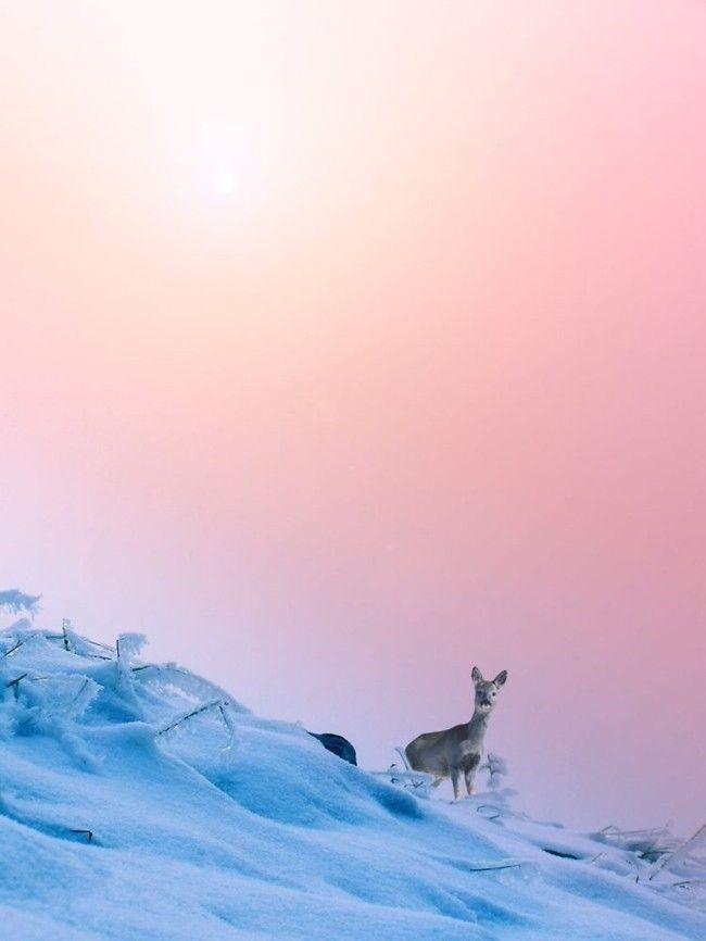 Trendfarben Serenity und Rose Quartz Natur Schnee
