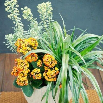 Vasen und Blumenbehälte
