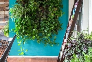 Vertikaler Garten Innen vertikaler garten ein besonderes highlight für innen und außen