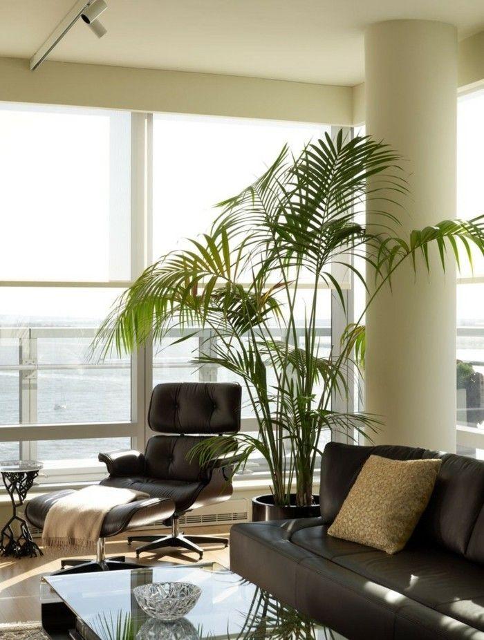 Zimmerpflanzen Areca Palme Raumklima im Sommer