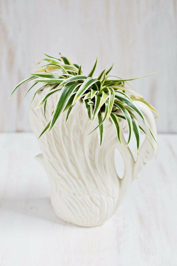 Zimmerpflanzen Grünlilie in weißem Topf