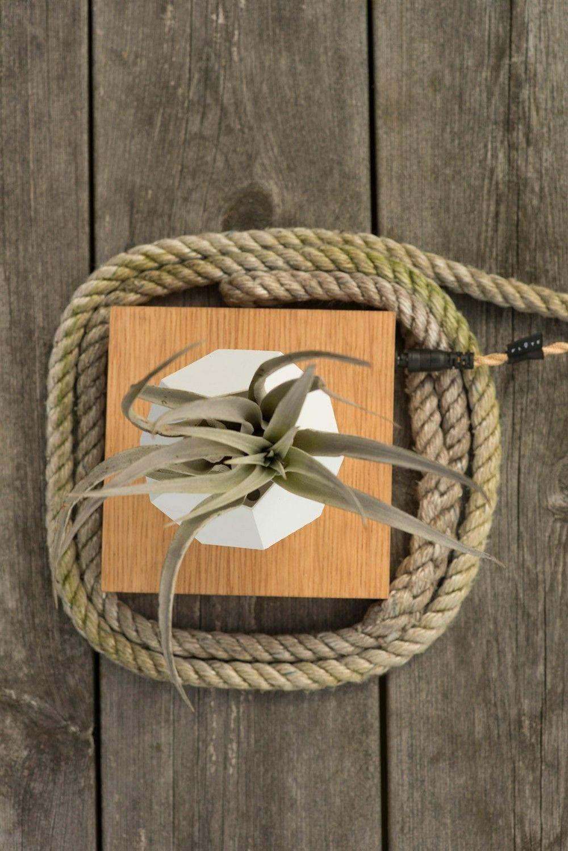 nostalgische romantische Deko Ideen Sukkulente Seil