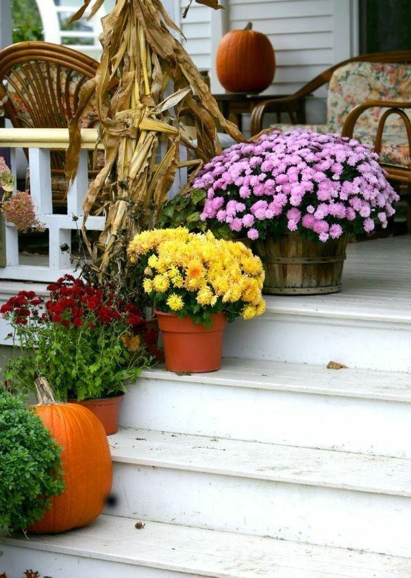 bunte-chrysanthemen-schmucken-traditionell-den-hauseingang-im-herbst