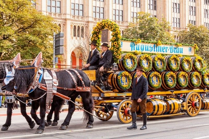 Das Pferdegespann des Augustiner-Bräu beim Münchner Oktoberfest auf dem Weg zur Wiesn, Deutschland