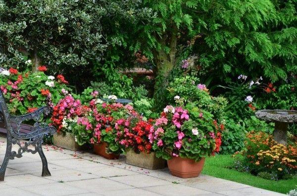 farbenfrohe-herbstblumen-verleihen-dem-ausenbereich-neuen-charme