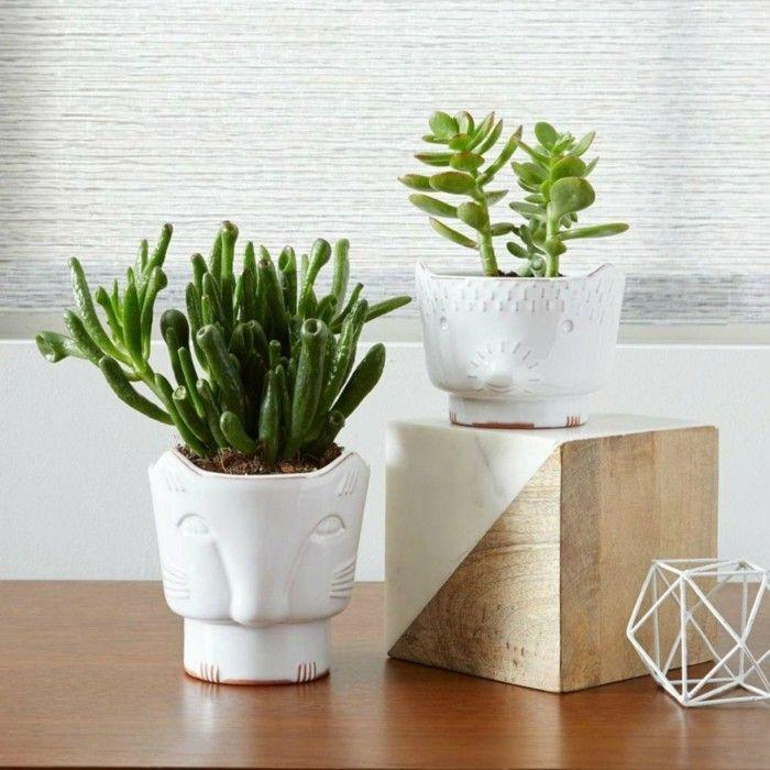 geldbaum-blumentopf-weis-perfekte-zimmerpflanzen