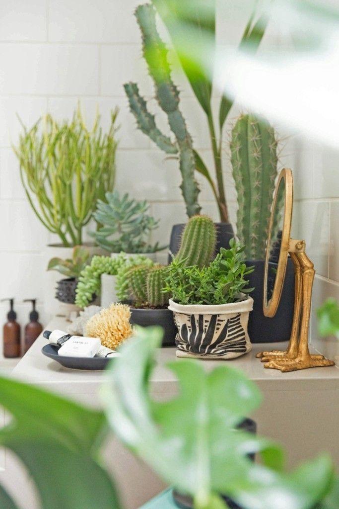 grune-pflanzen-bad-ideen