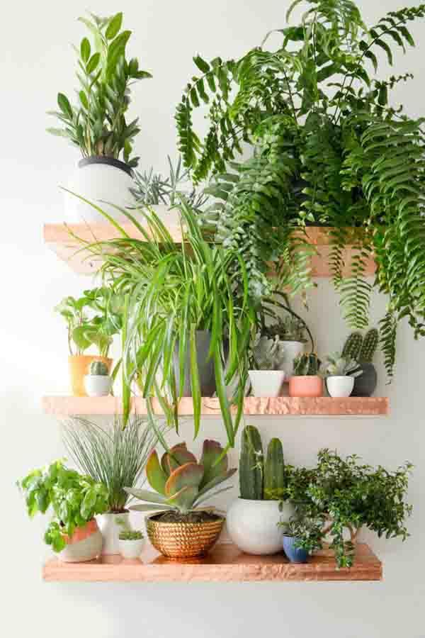 grune-wand-ideen-zimmerpflanzen
