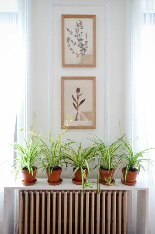 grunlilie-wandbilder-heizkorper-regal