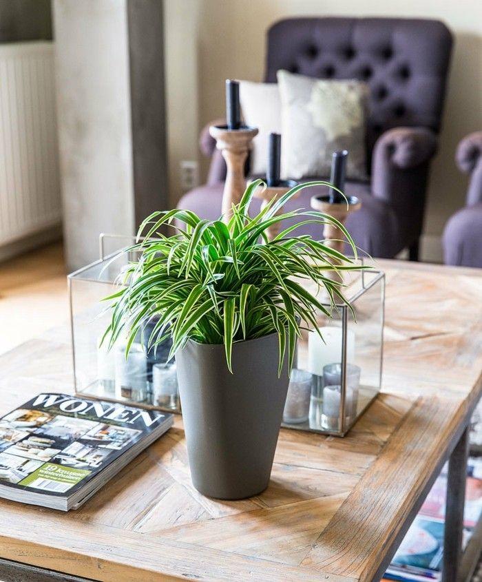 grunlilie-perfekte-zimmerpflanzen-wohnzimmer
